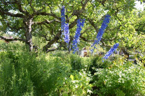 En vidunderlig have omgiver Selma Lagerlöfs barndomshjem. Foto: Kahoha.